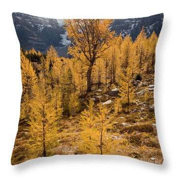 Larch Family Throw Pillow