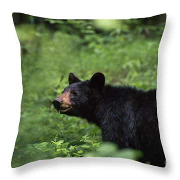 Throw Pillow featuring the photograph Large Black Bear by Andrea Silies