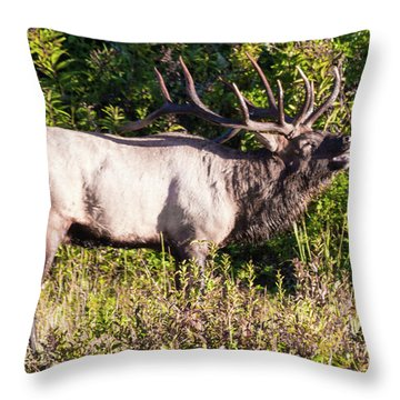 Large Bull Elk Bugling Throw Pillow