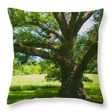 Throw Pillow featuring the photograph Large Connecticut Oak by Polly Castor