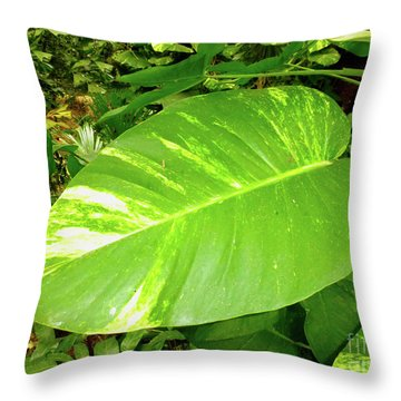 Throw Pillow featuring the photograph Large Leaf by Francesca Mackenney