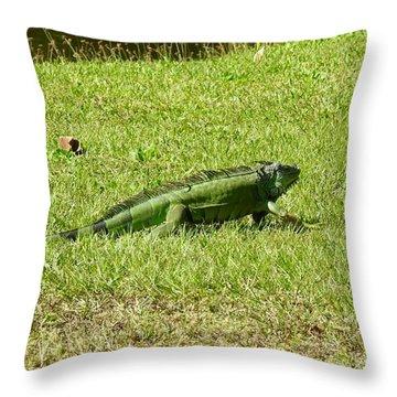 Large Sanibel Iguana Throw Pillow