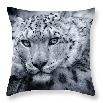 Large Snow Leopard Portrait Throw Pillow