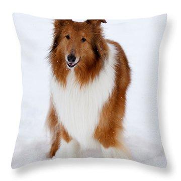 Lassie Enjoying The Snow Throw Pillow