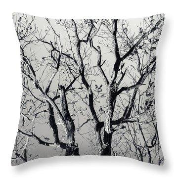 Last Light Oak Throw Pillow