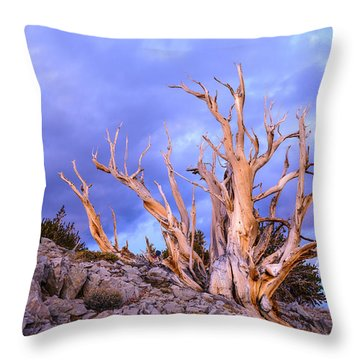 Last Light On The Bristlecones Throw Pillow