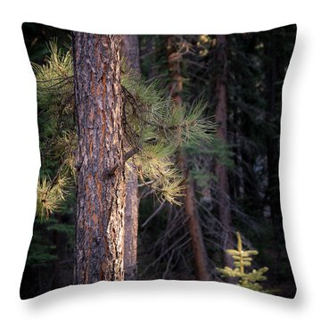 Throw Pillow featuring the photograph Last Light by The Forests Edge Photography - Diane Sandoval