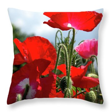 Last Poppies Of Summer Throw Pillow by Stephen Melia