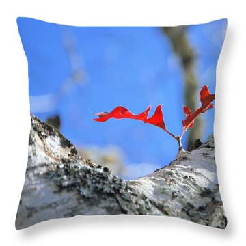 Throw Pillow featuring the photograph Last To Leaf by Debbie Karnes