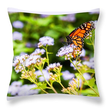 Late In The Season Butterfly Throw Pillow by Edward Peterson