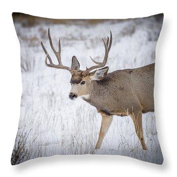 Late Rut Throw Pillow