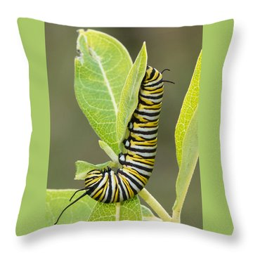 Late Season Monarch Throw Pillow