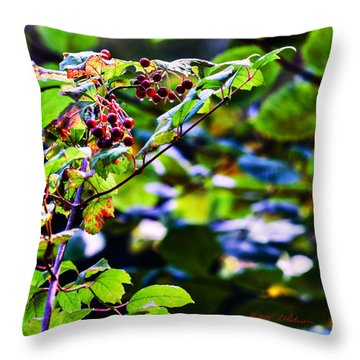 Late Summer Rain Throw Pillow by Edward Peterson