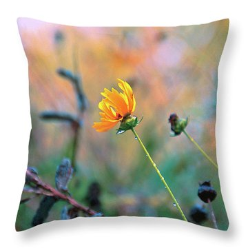 Late Summer Rain From The Forest Floor Throw Pillow by Bob Orsillo