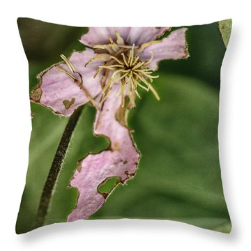Later That Same Day Throw Pillow