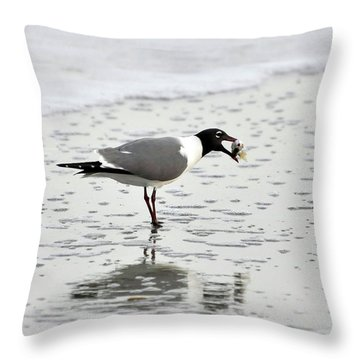 Laughing Gull Meal Throw Pillow by Al Powell Photography USA