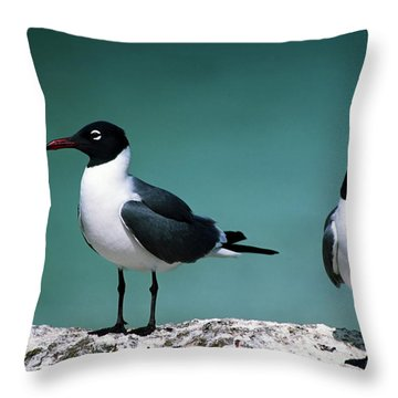 Laughing Gulls Throw Pillow by Sally Weigand