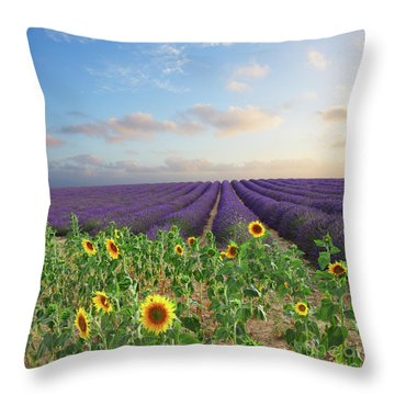 Lavender And Sunflower Flowers Field Throw Pillow