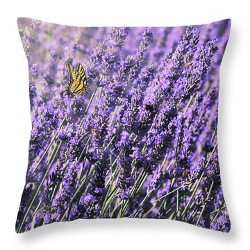 Lavender And Tiger Swallowtail In The Morning Light Throw Pillow by Diane Schuster