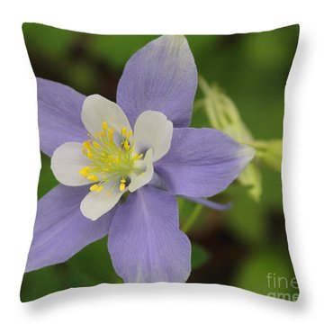 Lavender Blue Wild Columbine Throw Pillow