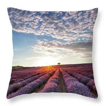 Lavender Throw Pillow by Evgeni Dinev
