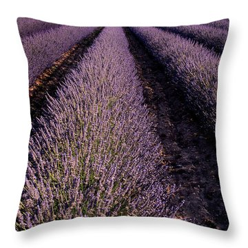 Lavender Field Provence France Throw Pillow