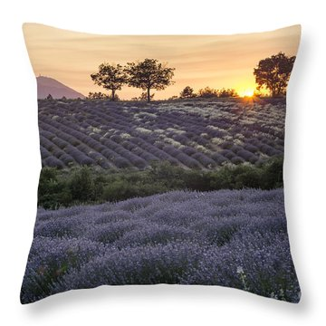 Throw Pillow featuring the photograph Lavender Field Provence  by Juergen Held