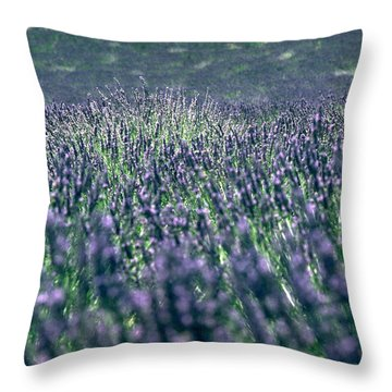 Lavender Throw Pillow by Flavia Westerwelle