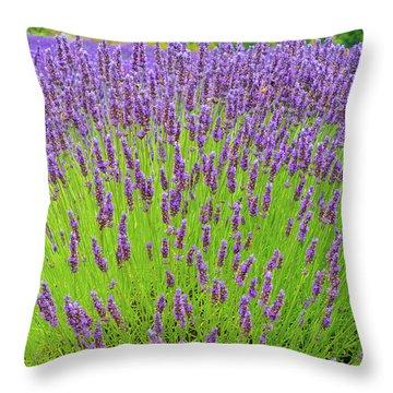 Lavender Gathering Throw Pillow