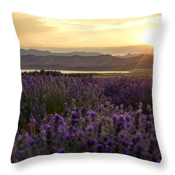 Lavender Throw Pillows