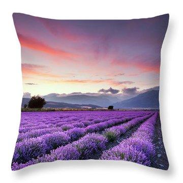 Lavender Season Throw Pillow by Evgeni Dinev