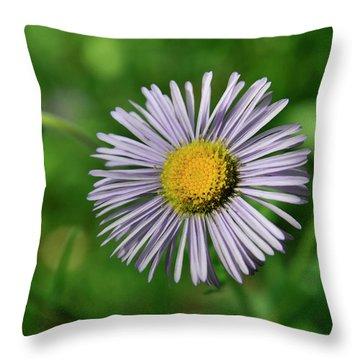 Lavender Serenity Throw Pillow