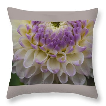 Lavender Shades Throw Pillow