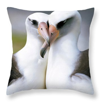 Laysan Albatross Phoebastria Throw Pillow by Tui De Roy