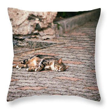 Throw Pillow featuring the photograph Lazy Cat    by Silvia Ganora