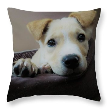 Throw Pillow featuring the photograph Lazy Day by Aaron Martens