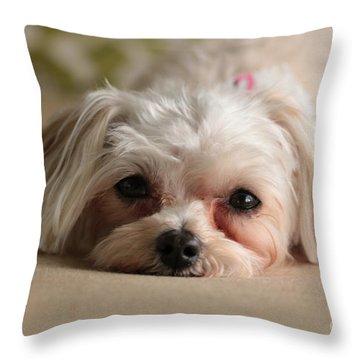 Maltipoo Throw Pillows
