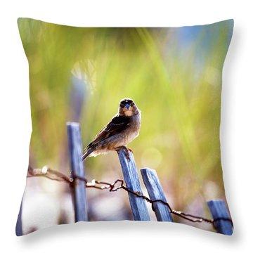 Throw Pillow featuring the photograph Lbi Beach Bird by John Rizzuto