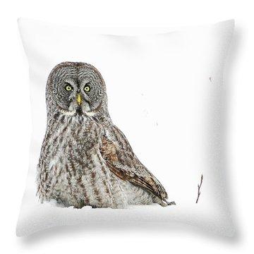 Le Curieux Throw Pillow
