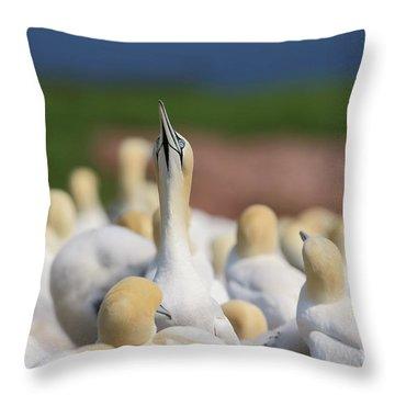 Le Fou. Throw Pillow