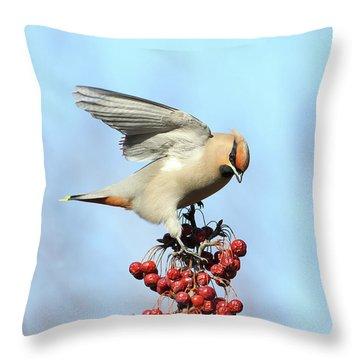 Le Jaseur Acrobate. Throw Pillow
