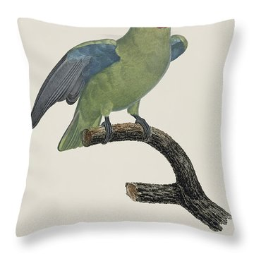 Le Perroquet Geoffroy Male / Red Cheeked Parrot - Restored 19th C. By Barraband Throw Pillow by Jose Elias - Sofia Pereira