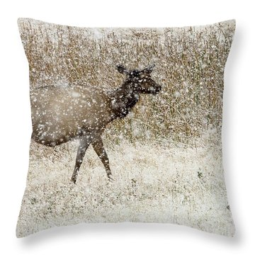 Lead Cow Throw Pillow