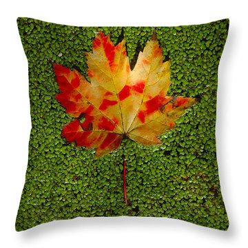 Leaf Floating On Duckweed Throw Pillow