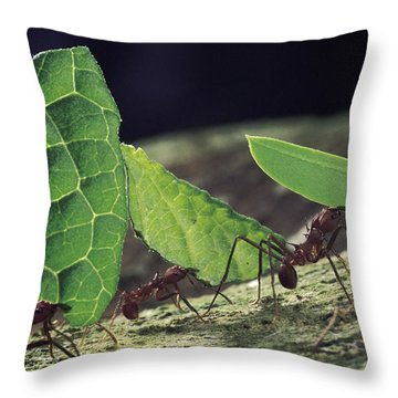 Leafcutter Ant Atta Cephalotes Workers Throw Pillow by Mark Moffett