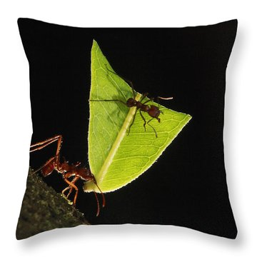 Leafcutter Ant Atta Sp Carrying Leaf Throw Pillow by Cyril Ruoso