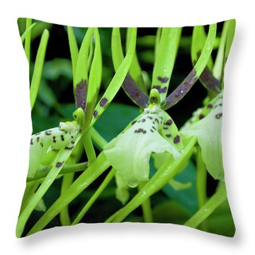 Leap Frog Throw Pillow