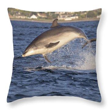 Jolly Jumper - Bottlenose Dolphin #40 Throw Pillow