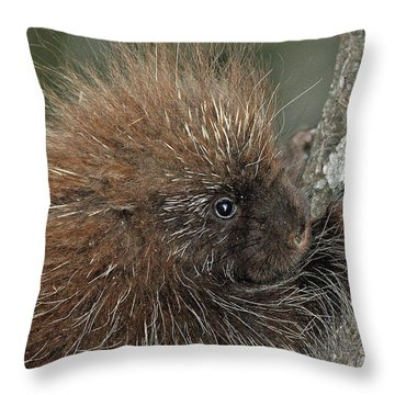 Throw Pillow featuring the photograph Learning To Climb by Glenn Gordon