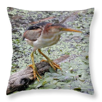 Throw Pillow featuring the photograph Least Bittern by Doris Potter